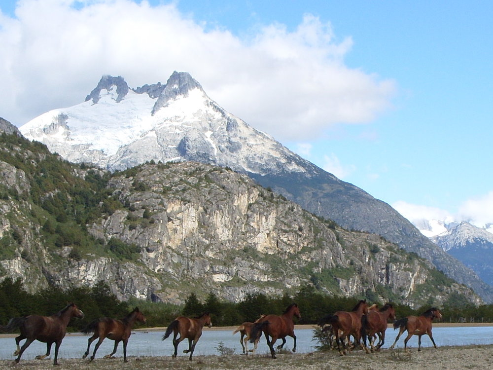 Horses w:Orquetas√+.jpg