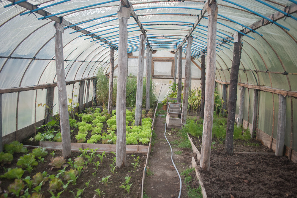 greenhouse inside lots of lettuce.jpg
