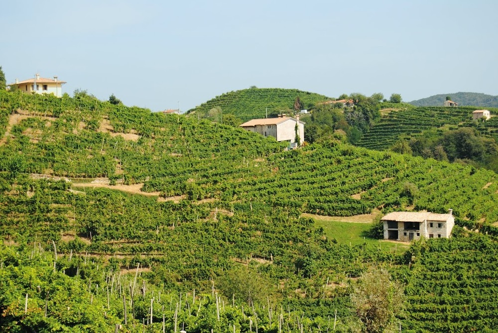 Prosecco hills.jpg