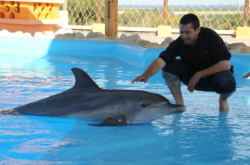 Swim with the dolphins at Friguia Park in Tunisia