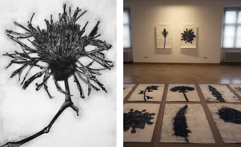 Left: Carol Wyss' Prizewinning piece: Centaurea Scabiosa 'Greater Knapweed' and Right: Carol Wyss 2011-2014 80 x 116cm, etchings - the flowers comprise intricate studies up of human bones.   Carol Wyss' work is a concerted search for the structure of things; she takes familiar structures apart and puts them together differently again.  The human skeleton is the basic structure through which she examines the relationship of human structures to their surroundings. Through dismantling and opposing existing structures new formations are created.  Abstraction is part of the process – not trying to hide the origins, rather broadening the possibilities for interpretation. What you see at first glance is not necessarily what it is.