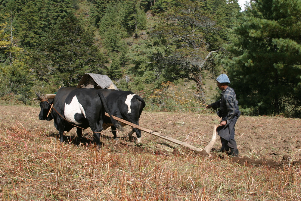 Village life in  Bumthang