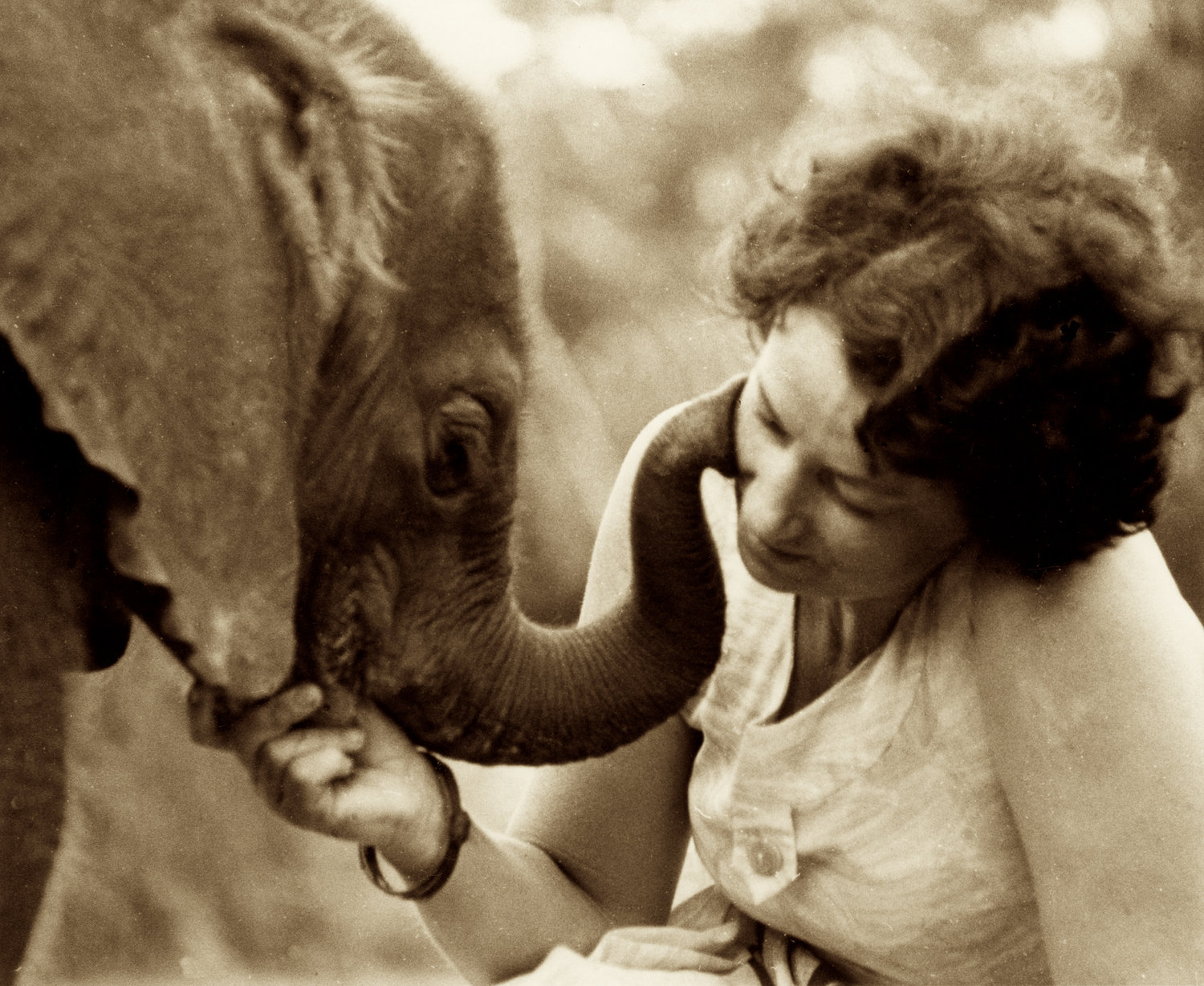 Image result for images of daphne sheldrick with orphaned elephants and rhinos