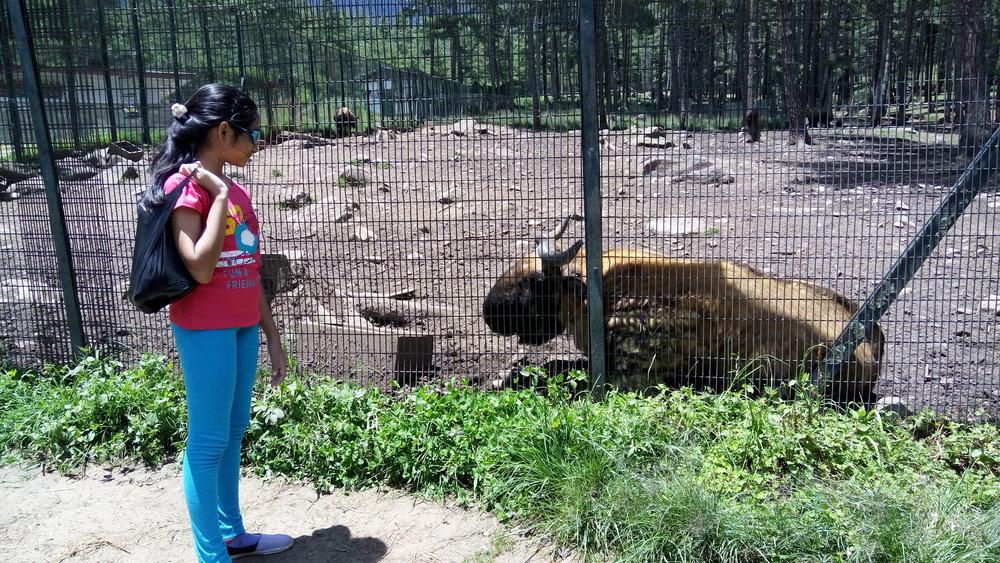 The Takin Bhutan