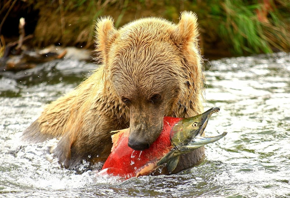 Katmai National Park Alaska