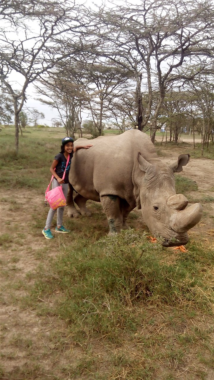 Touching white rhino.jpg