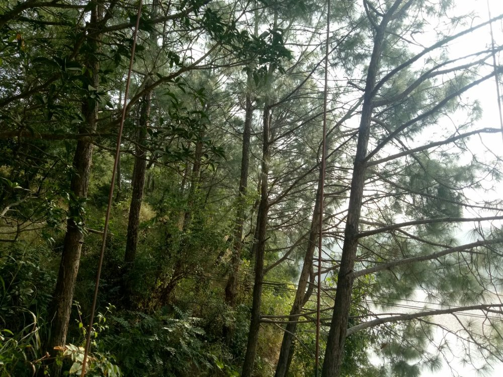 Forest in himachal