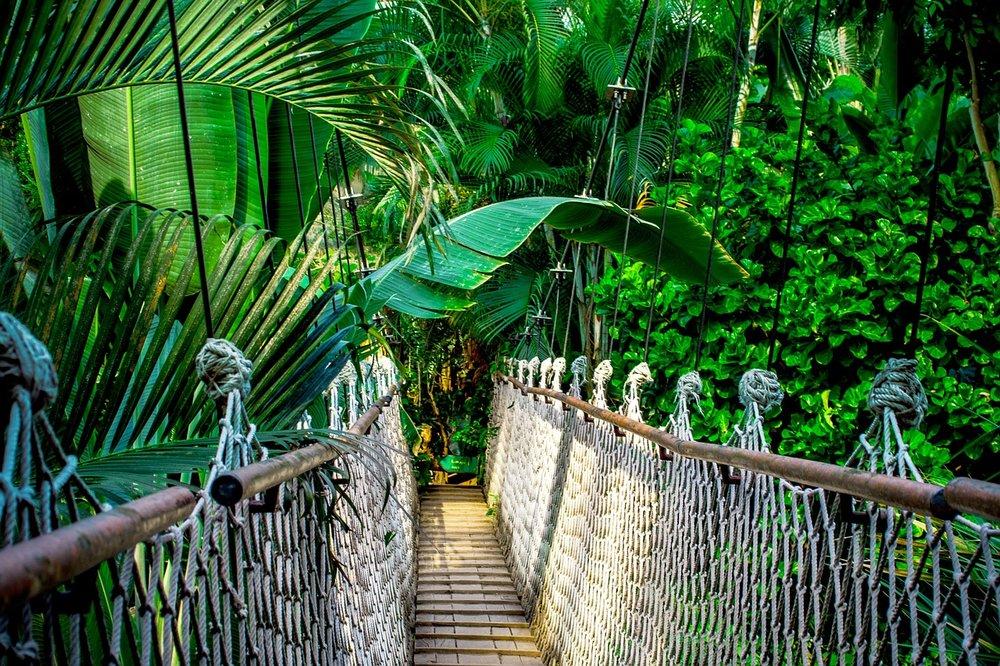 Forest Adventures in Vanuatu