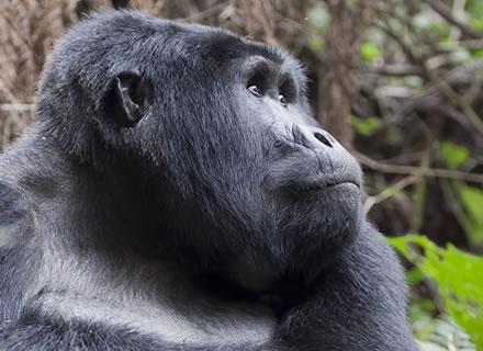 bwindi-gorilla-safari.jpg
