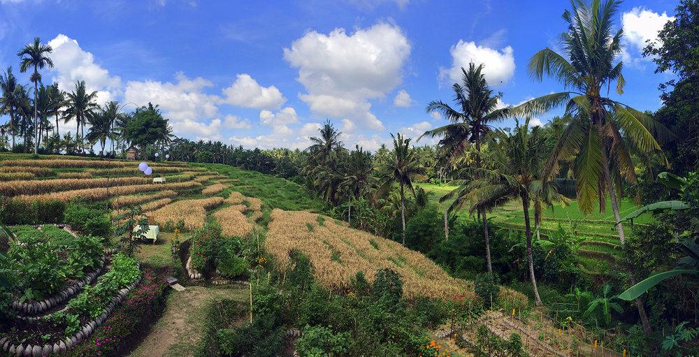Bali Shine On Yoga Retreat   May 6-13, 2018