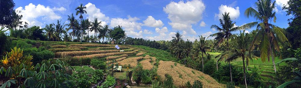 bali-rice-field-ubud-yoga-peaceful
