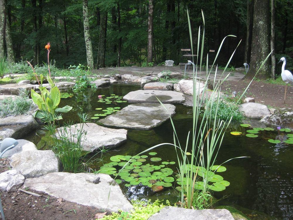 pond_1.jpg