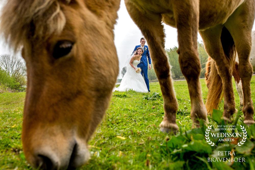 award-trouwfotograaf-wedisson