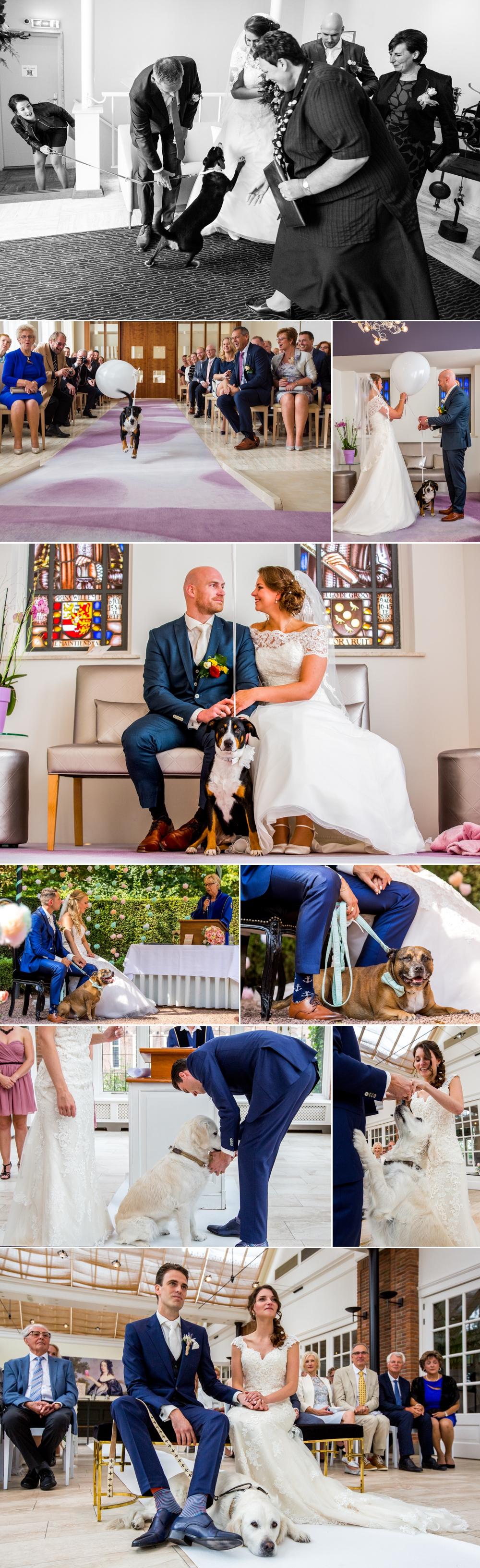 hond-brengt-trouwringen