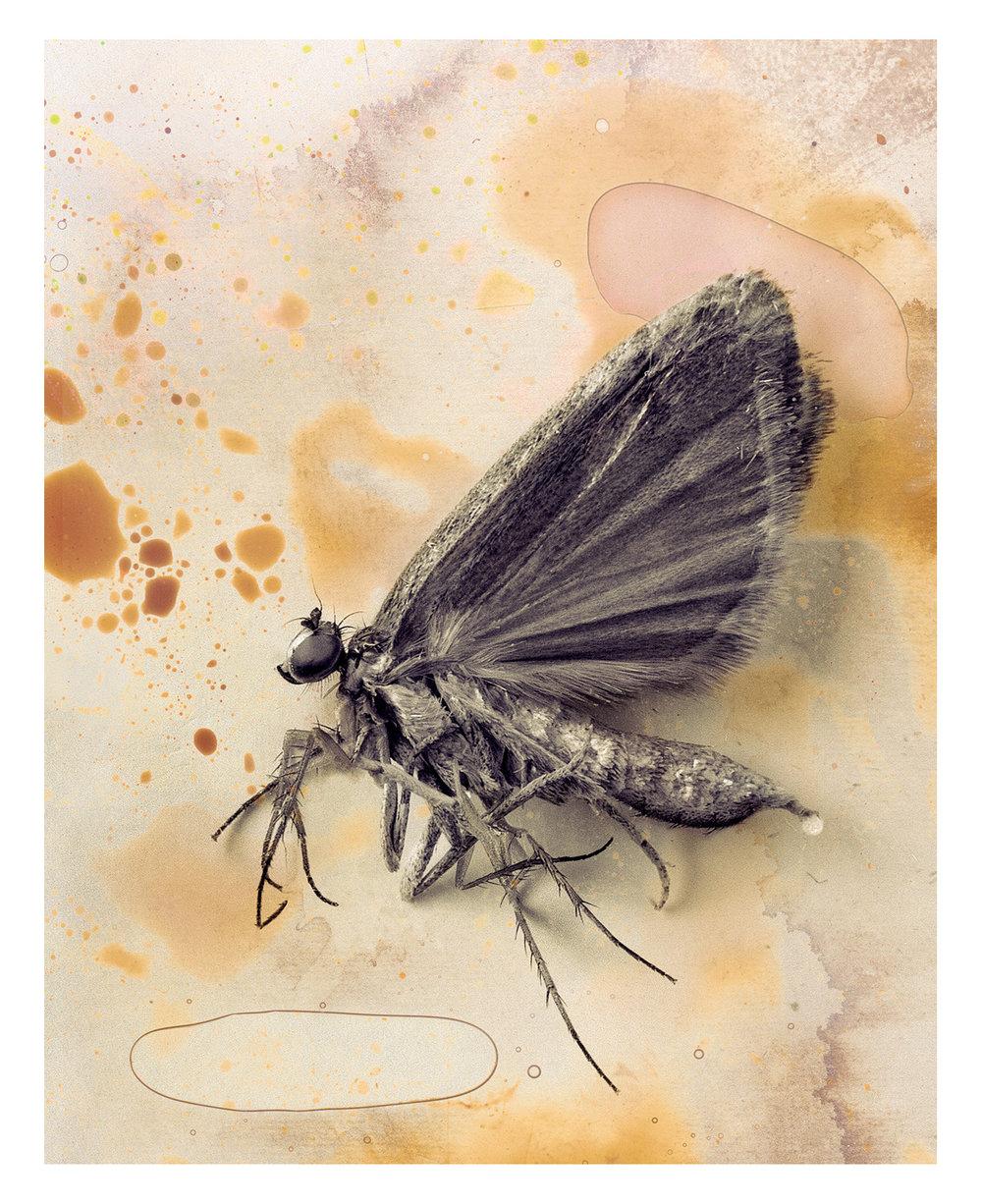 The Mothfly 2002.jpg
