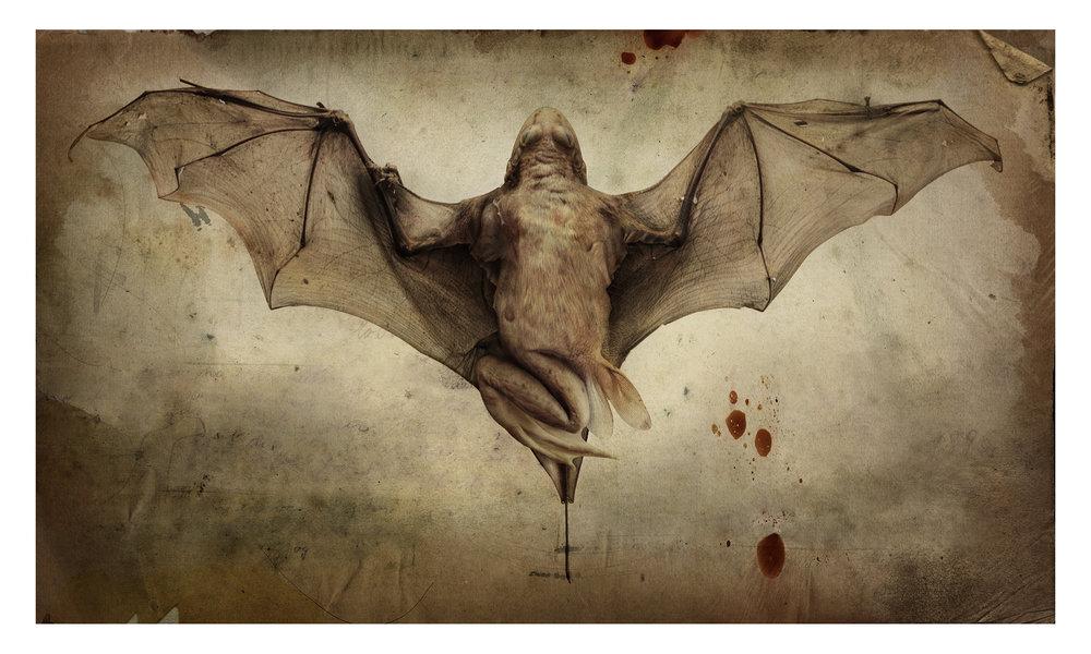 Vampirefrog 2004.jpg