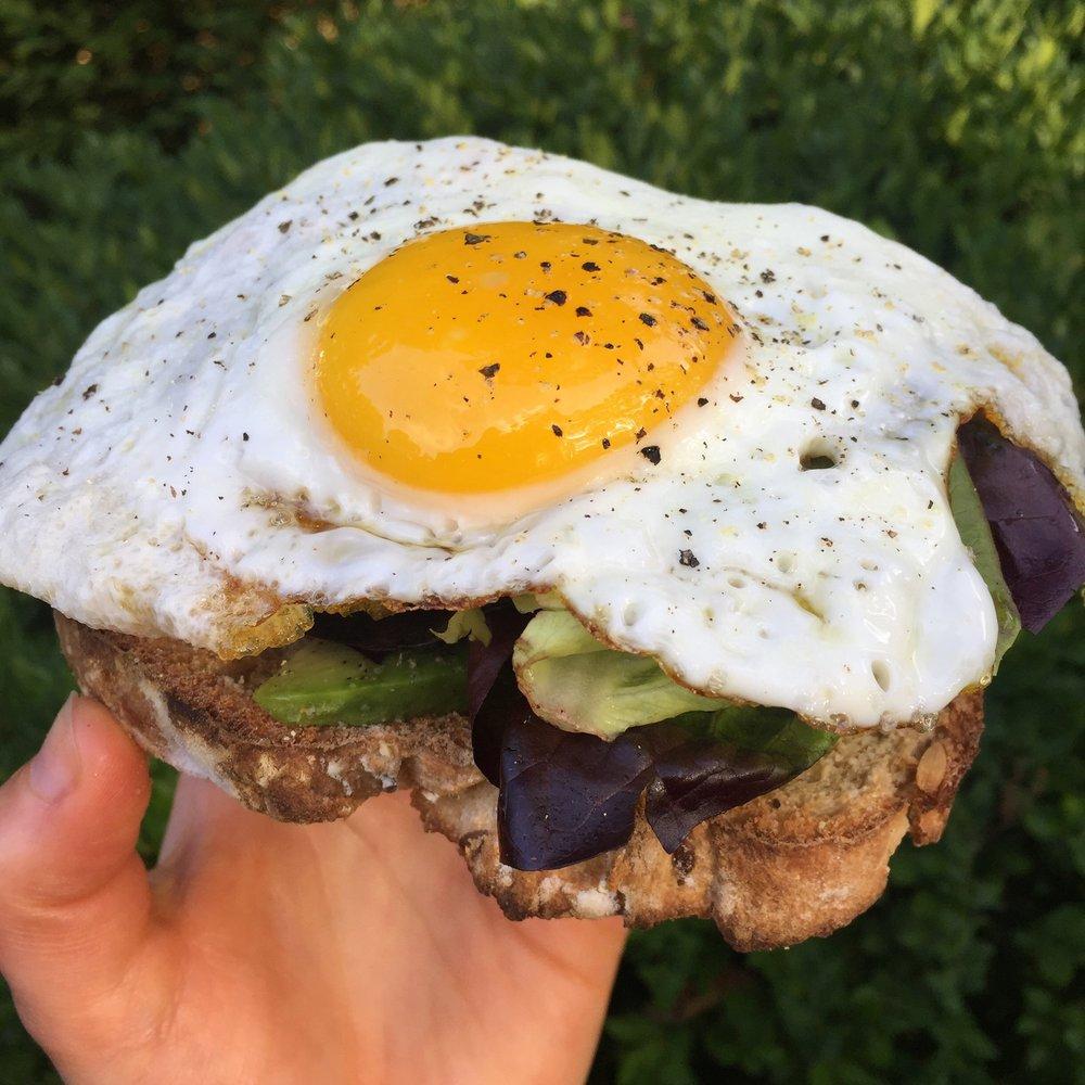 Homemade  whole wheat bread  + avocado + butter lettuce + fried egg + salt/pepper