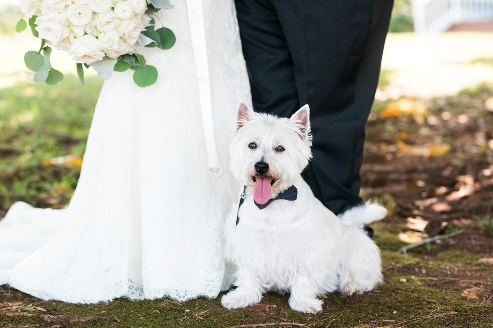 Bride & Groom with dog | Kyle & Erin | Scarbrough Wedding | Children's Harbor | Laura Wilkerson Photography
