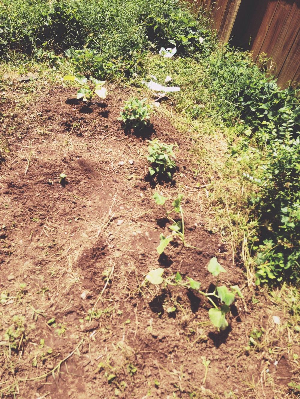 rebuild the soil