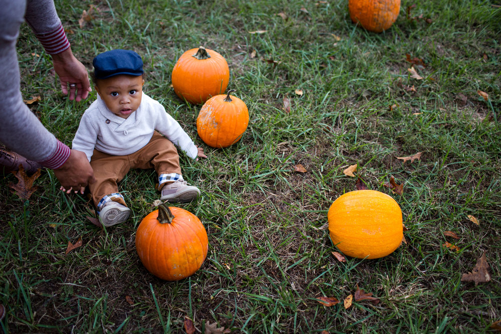 toddler boy in pumpkin patch lifestyle photographer st robert mo