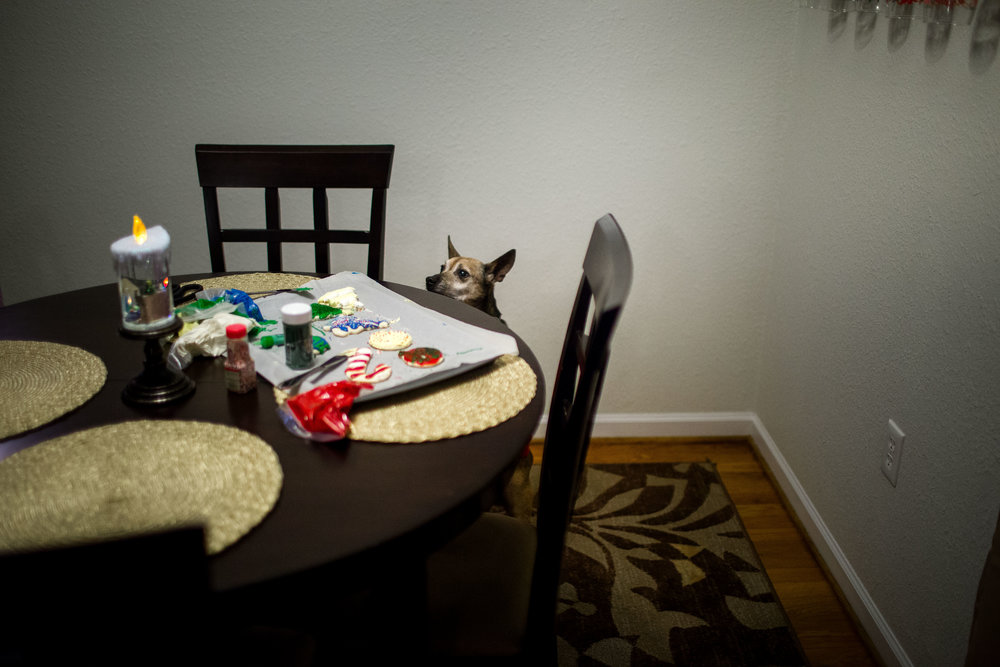 dog trying to steal cookies off table lifestyle photography fort Leonard wood