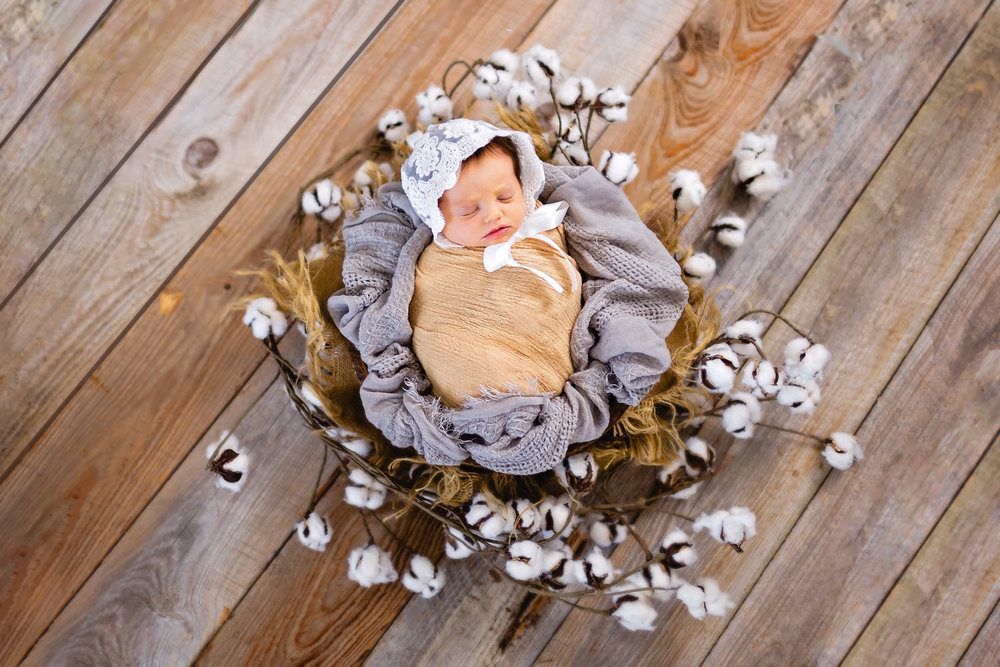 newborn on barn wood in basket surrounded by cotton waynesville photographer