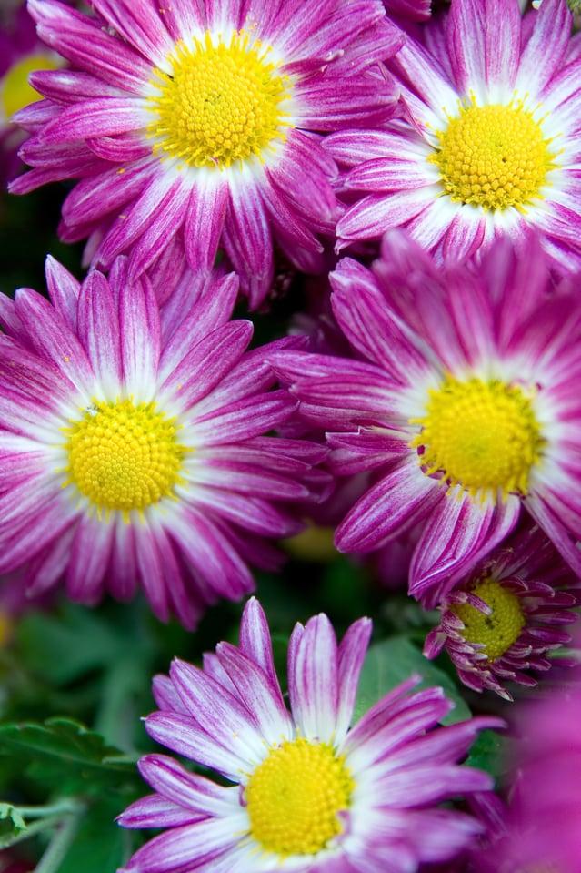 flowers-1361362-639x958.jpg