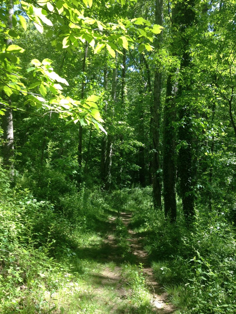 Ruins Trail, Swannanoa