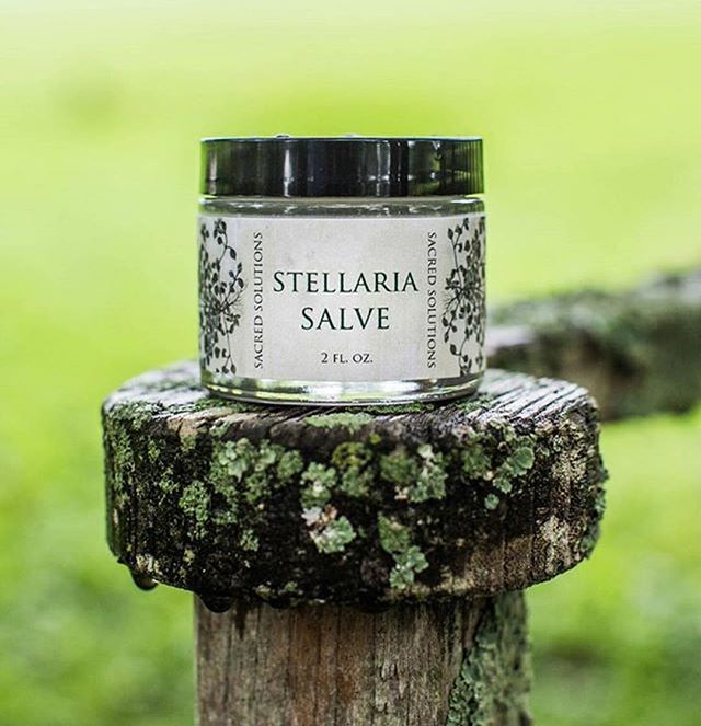 Sacred Solutions Stellaria Salve heals your tattoo with ease...faster than most traditional petroleum-based products! Relieve redness, inflammation, with cooling chickweed which is natural antibacterial. Blended with apricot oil is light on skin, great for sensitive skin as well because there's no heavy fragrance, just cumin oil, plantain, and beeswax! Available in .5oz, 1oz, 2 oz, 4 oz, and coming soon 8 oz! For Tattooers!  Great to use WHILE Tattooing and after!!!!!!!!!!🍃🌿🌱🍃🌿🍀 #sacredsolutions #bltg #herbal #healyourskin #tattoosalve #tattooaftercare #tattoohealing #inkhealing #boho #handmade #withlove #hardwork #etsyshop #stellariasalve #streetofshops #chickweed #chickweedsalve #natural #organic #organicskincare #saburtattoos #sacredsolutionsskincare #essentialoils  Visit our website at sacredsolutionsskincare.com and on ETSY!  Street of Shops,  Lewisburg, Pa. Antique Mall....