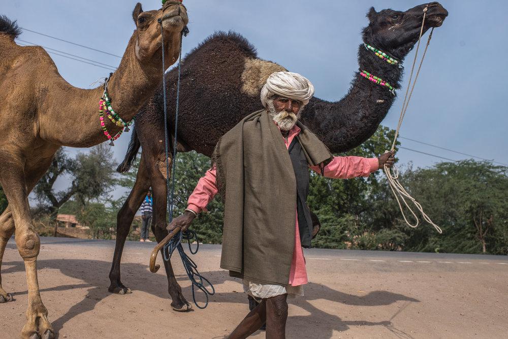 The Camel-Herder