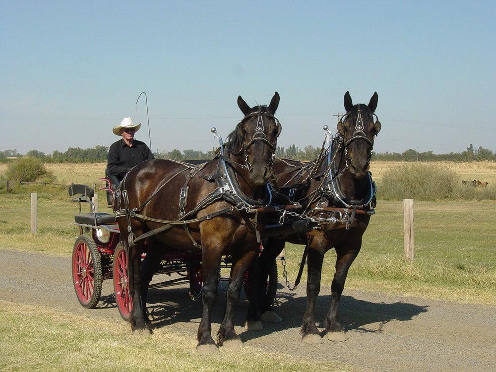 September 2006 Horses 038.jpg