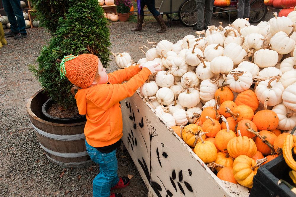 pumpkins (1 of 1).jpg