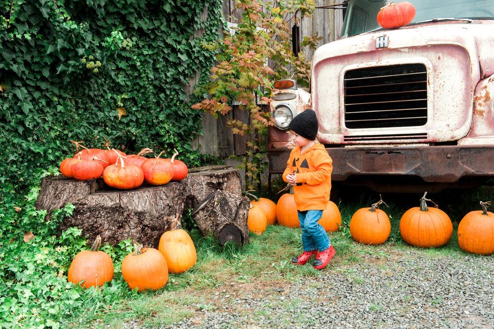 pumpkins (1 of 13).jpg