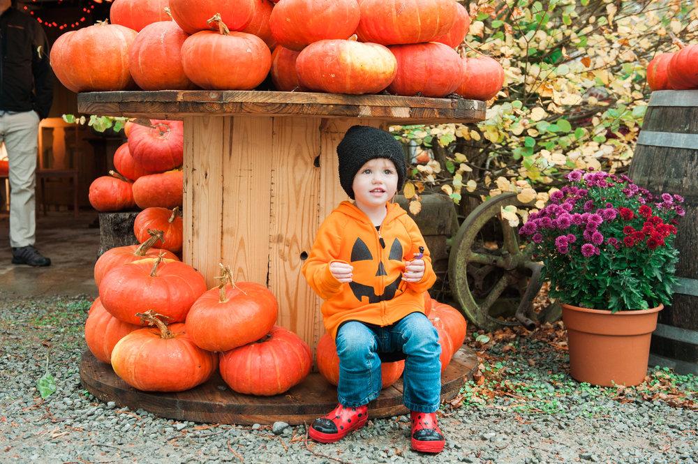 pumpkins (3 of 13).jpg