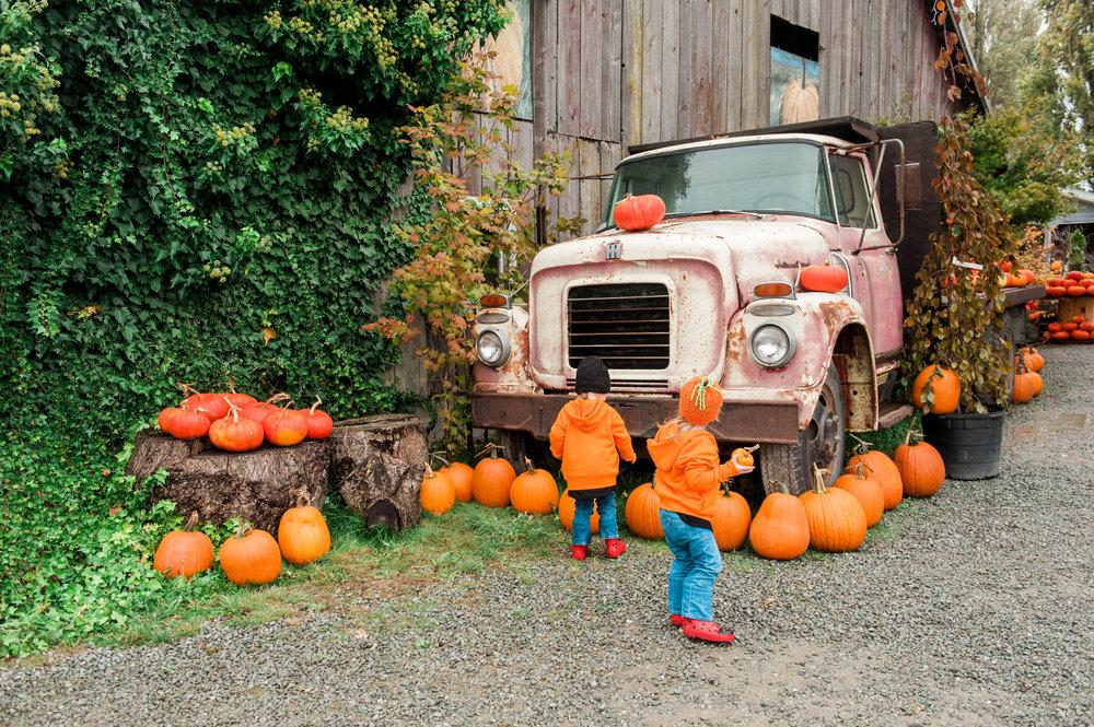 pumpkins (4 of 13).jpg