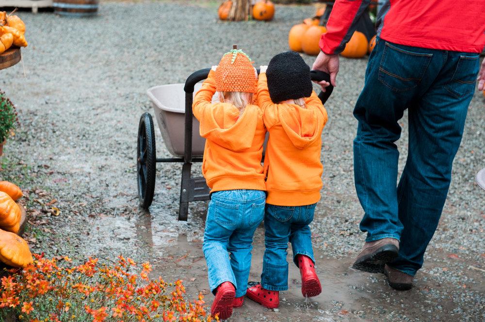 pumpkins (7 of 13).jpg
