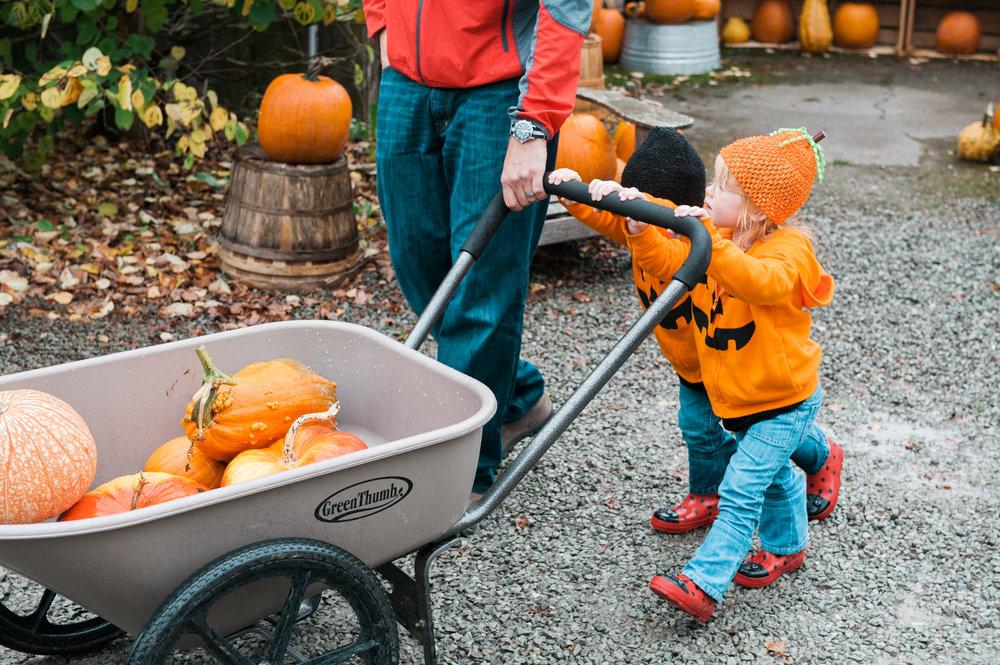 pumpkins (8 of 13).jpg