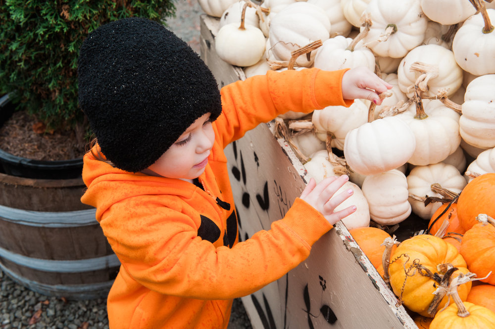 pumpkins (9 of 13).jpg