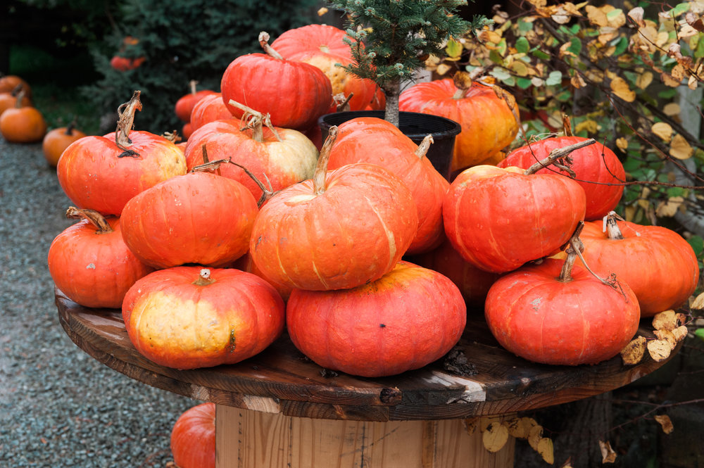 pumpkins (11 of 13).jpg