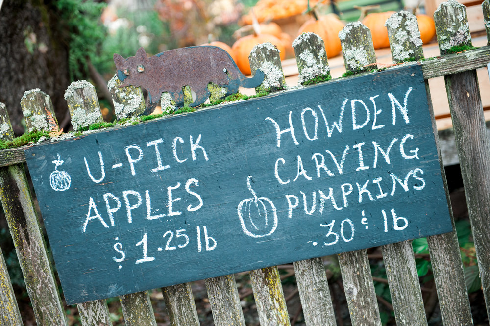 pumpkins (13 of 13).jpg