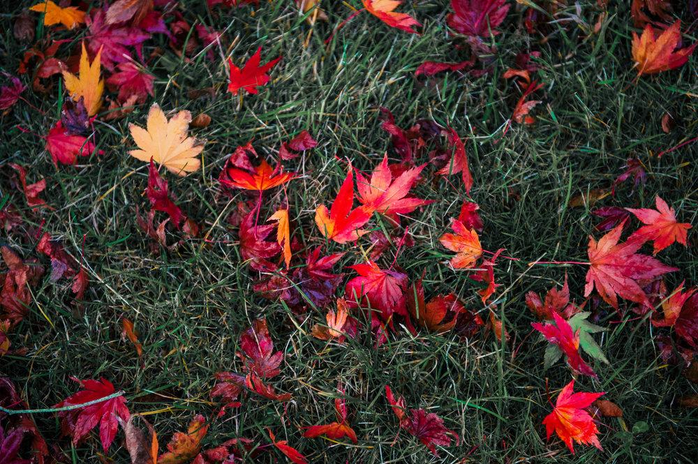 Fall1 (1 of 23).jpg