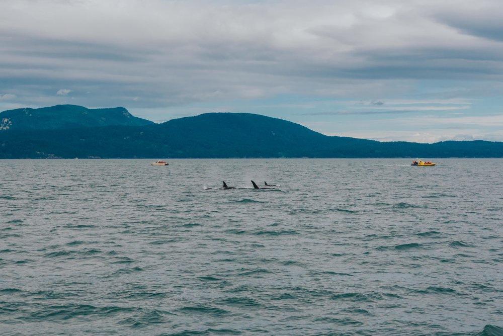 Orcas-Island-Wedding-Photographer (32 of 106).jpg