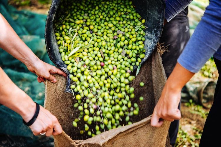 Olives-.jpg