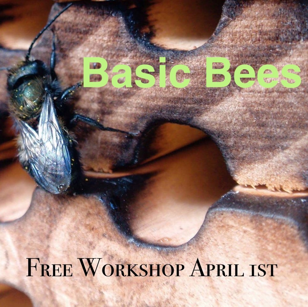 Our free Basic Bees class is just one way that we reach out to educate the local community. In this class we teach the difference between honeybees and native bees.