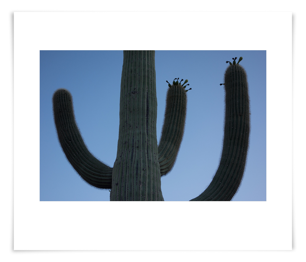 The Tom Thumb Saguaro (CG10 151026)   24 x 28 in (61 x 71 cm)