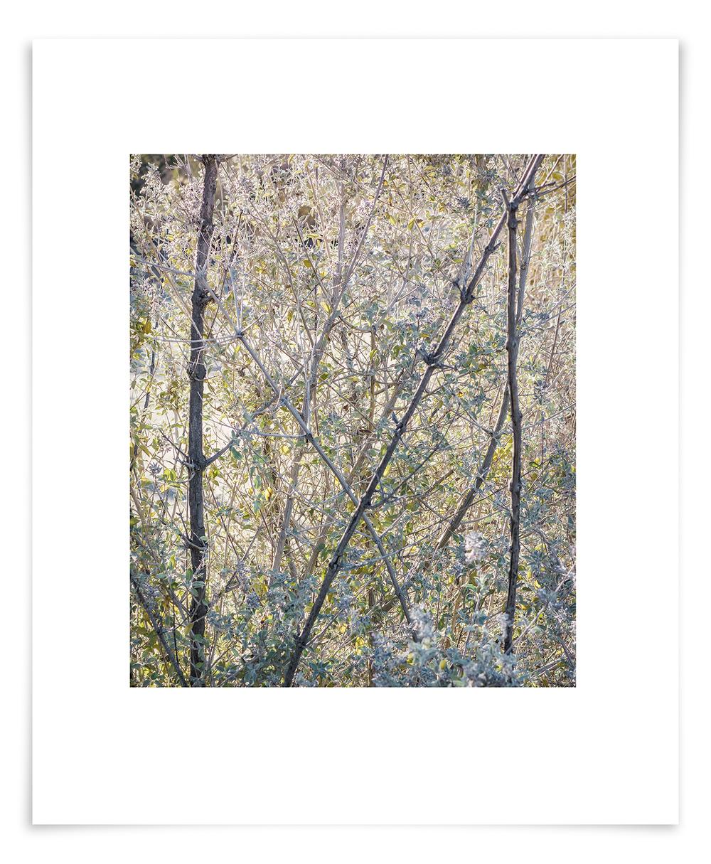 The Camino Desert Lavender (HE02 140704)   26 x 20 in (66 x 51 cm)