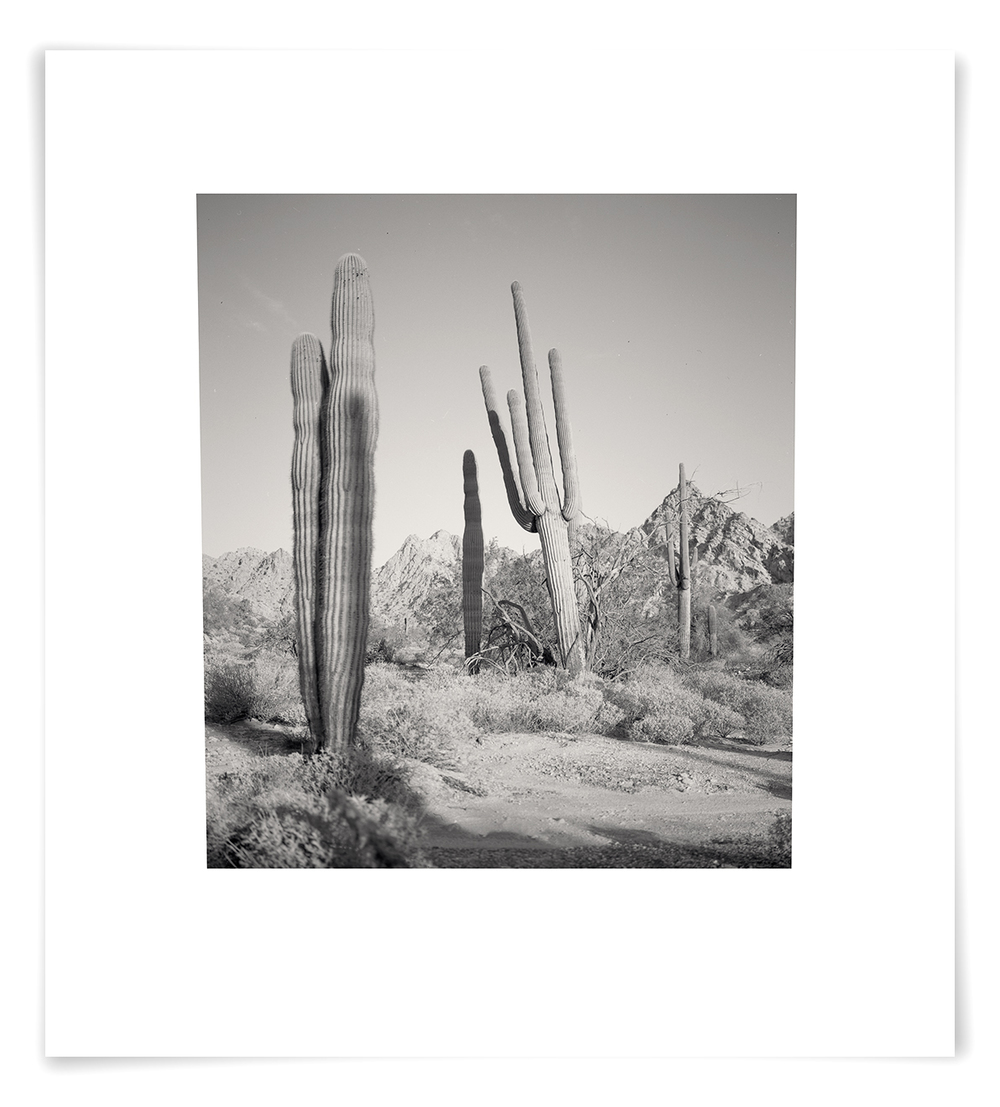 The Tinajas Altas Pass Saguaro (CG02 140513)   27 x 24 in (69 x 61 cm)