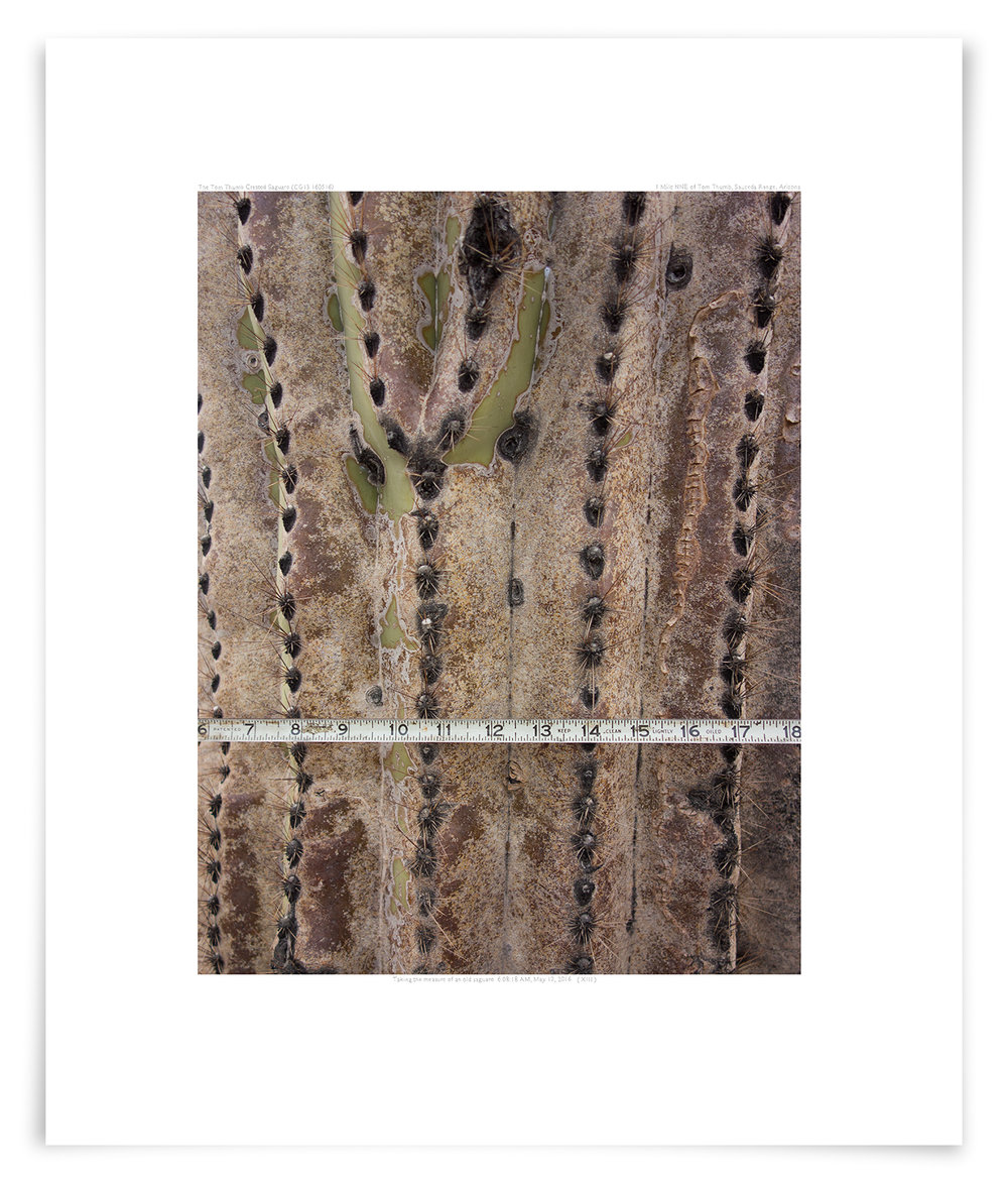 The Tom Thumb Crested Saguaro (CG13 160516)   23 x 19 in (58 x 48 cm)