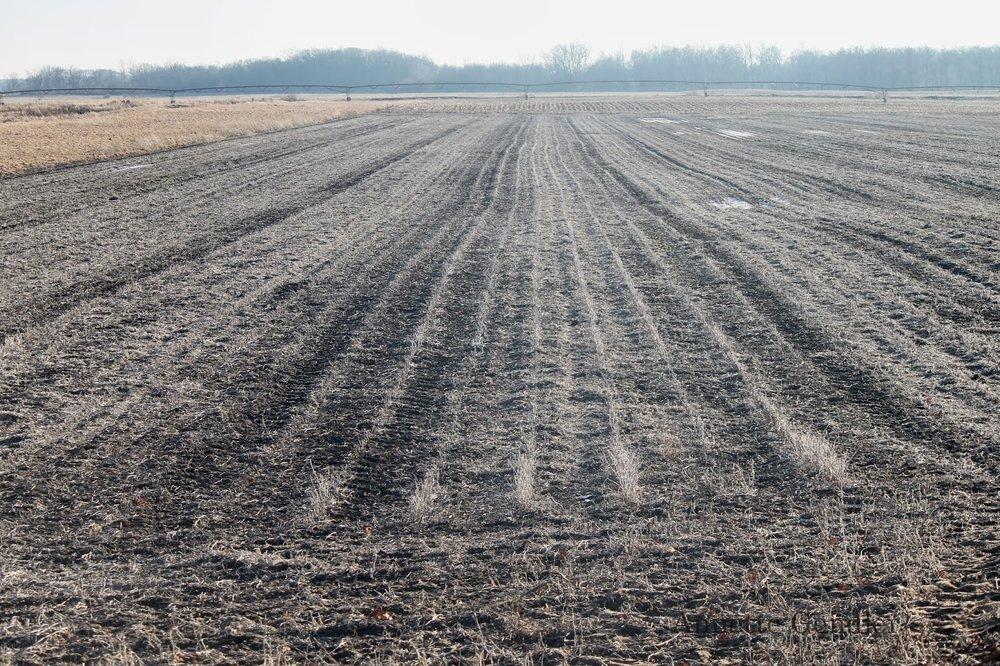 Barren Field in Winter.JPG