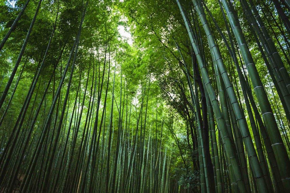 Japan Trip Part 1- Kyoto-60.jpg